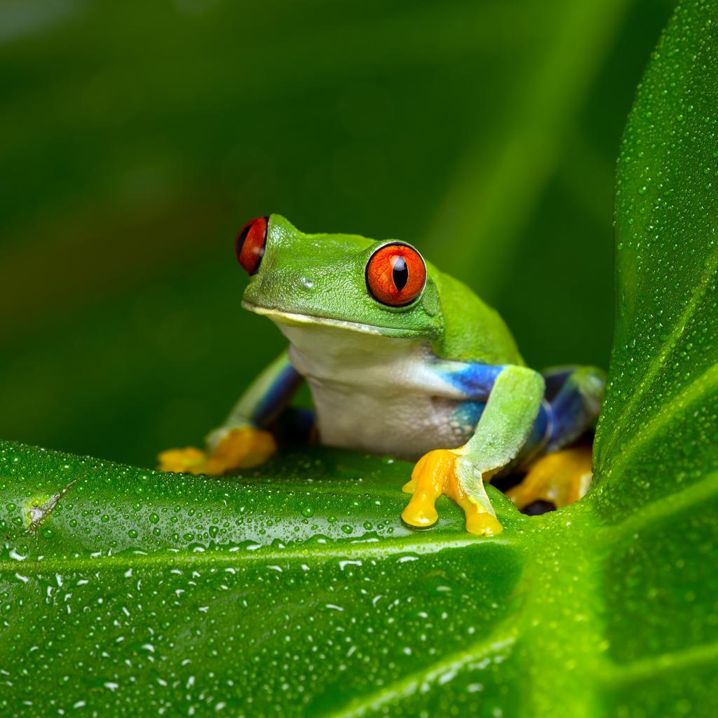 Frogs – hearing with no ears | Sonova International